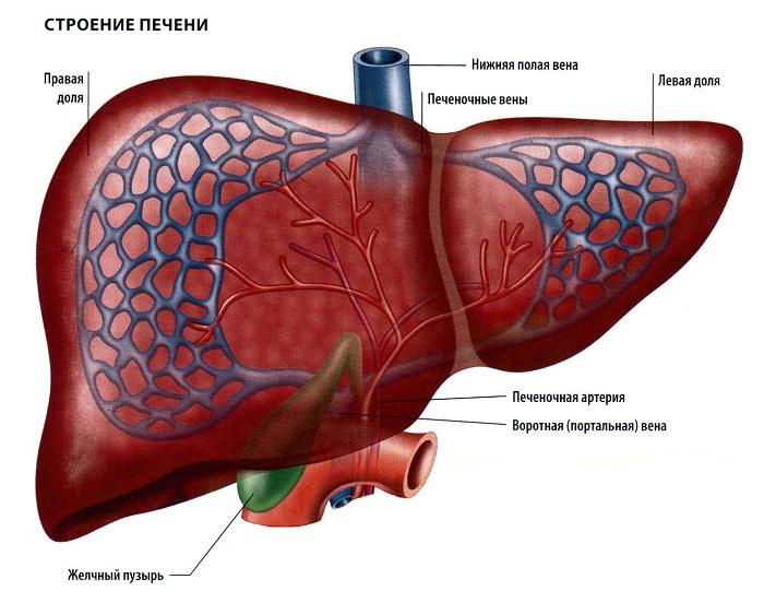 Данных за хронический вирусный гепатит с нет