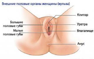 Порно видеоанатомия половых органов человека