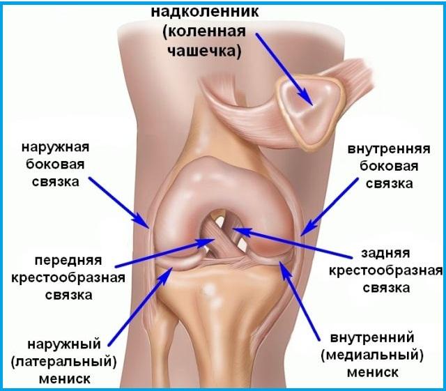 Коленная структура