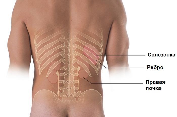 Где, как и почему болят почки – основные причины и симптомы